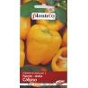 Nasiona papryki słodkiej Calipso
