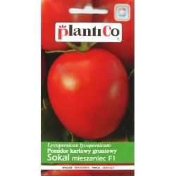 Pomidor karłowy gruntowy Sokal mieszaniec F1 - 0,5g - Plantico
