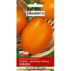 Pomidor - gruntowy karłowy Jokato - 0,5g - Plantico