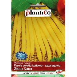 Nasiona fasoli karłowej szparagowej Złota Saxa