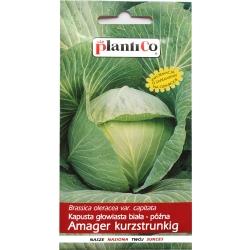 Nasiona kapusty głowiastej białej Amager kurzstrunkig