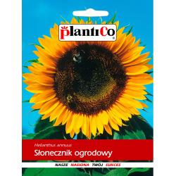 Nasiona słonecznika