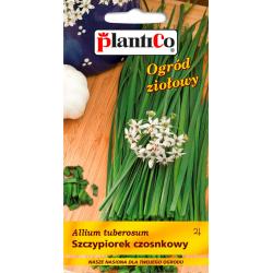 Nasiona szczypiorku czosnkowego