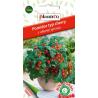 Nasiona pomidora czerwonego