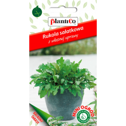 Rukola sałatkowa - 1g - Plantico