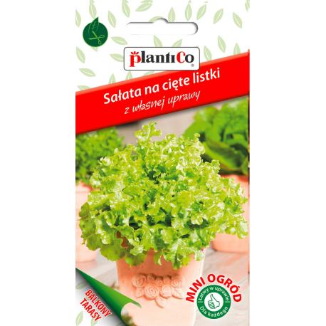 Nasiona sałaty fryzowanej na cięte listki