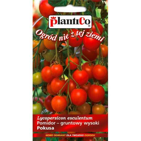 Nasiona pomidora wysokiego Pokusa