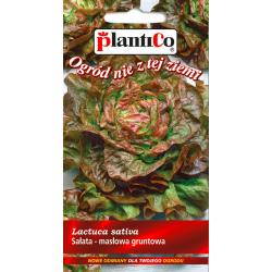 Sałata głowiasta masłowa - gruntowa - 1g - Plantico