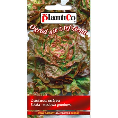 Nasiona sałaty głowiastej masłowej