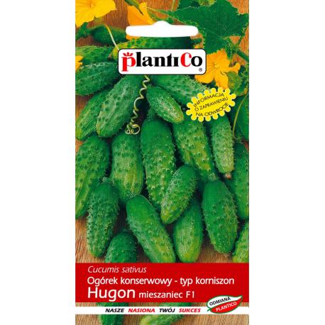 Nasiona ogórka gruntowego Hugon