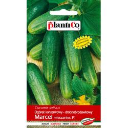 Nasiona ogórka drobnobrodawkowego Marcel