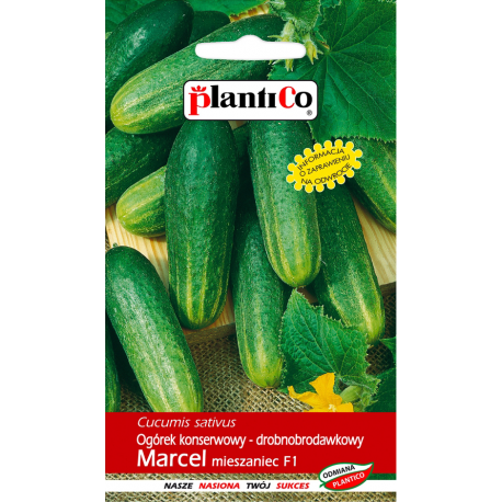 Ogórek konserwowy - drobnobrodawkowy Marcel - 5g