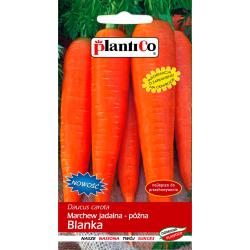Nasiona marchwi późnej Blanka