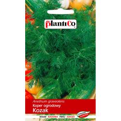 Nasiona kopru Kozak