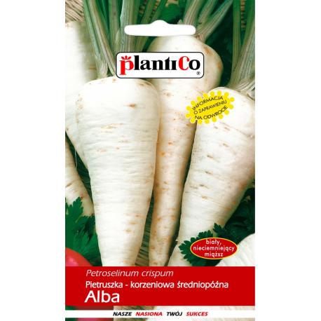 Nasiona pietruszki korzeniowej średniopóźnej Alba