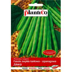 Nasiona fasoli karłowej szparagowej